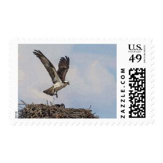 Osprey in a nest postage