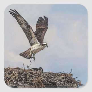 Osprey in a nest square sticker