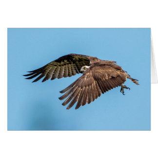 Osprey in flight at Honeymoon Island State Park Card