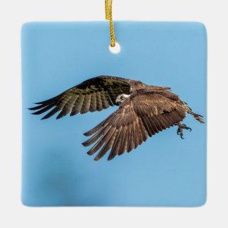 Osprey in flight at Honeymoon Island State Park Ceramic Ornament