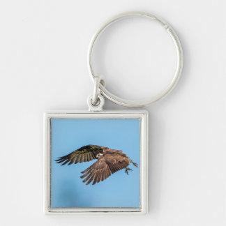 Osprey in flight at Honeymoon Island State Park Keychain