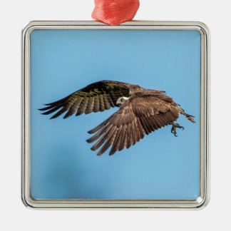 Osprey in flight at Honeymoon Island State Park Metal Ornament