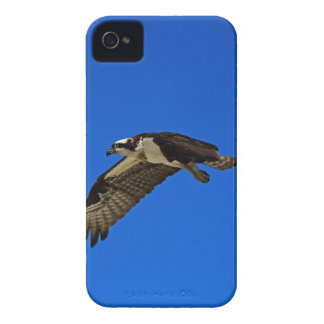Osprey in Flight II iPhone 4 Cover