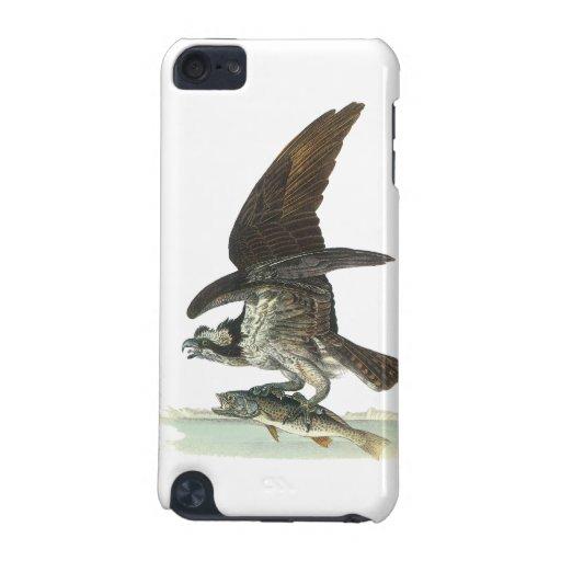 Osprey, Juan Audubon