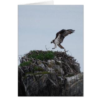 Osprey Landing Greeting Cards