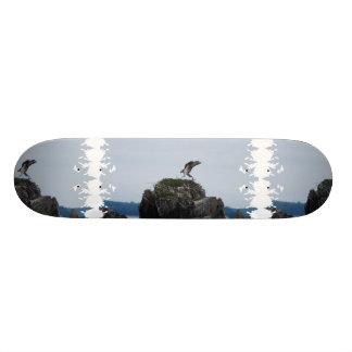 Osprey Landing Skateboard