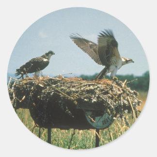 Osprey Nest Classic Round Sticker