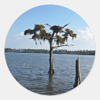 Osprey Nest in Tree Classic Round Sticker