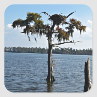Osprey Nest in Tree Square Sticker