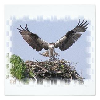 "Osprey Nest Invitations 5.25"" Square Invitation Card"
