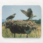 Osprey Nest Mouse Pads