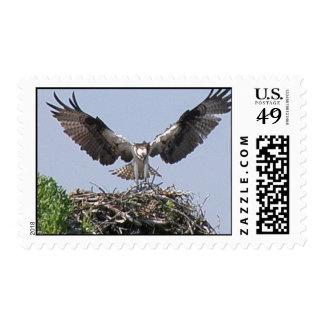 Osprey Nest Postage Stamp
