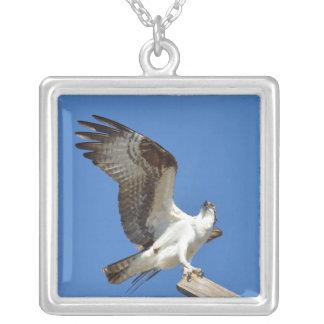 Osprey o las alas del halcón estiró el collar
