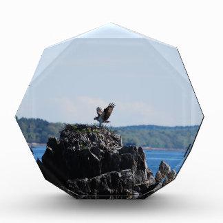 Osprey on Nest Acrylic Award