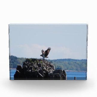 Osprey on Nest Award