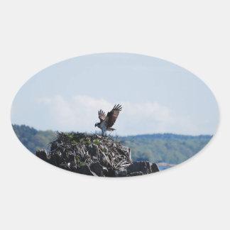 Osprey on Nest Oval Sticker