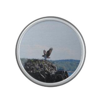 Osprey on Nest Speaker