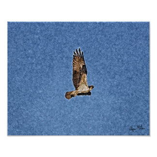 Osprey Posters