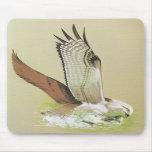 Osprey - Pandion haliaetus Mouse Mats