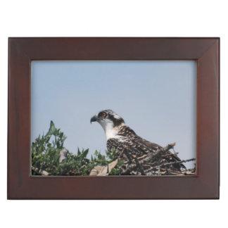 Osprey Keepsake Boxes