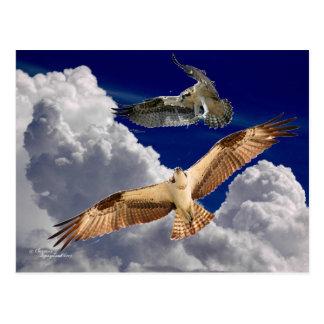 Osprey Puffy Clouds Postcard