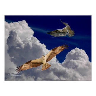 Osprey Puffy Clouds Poster