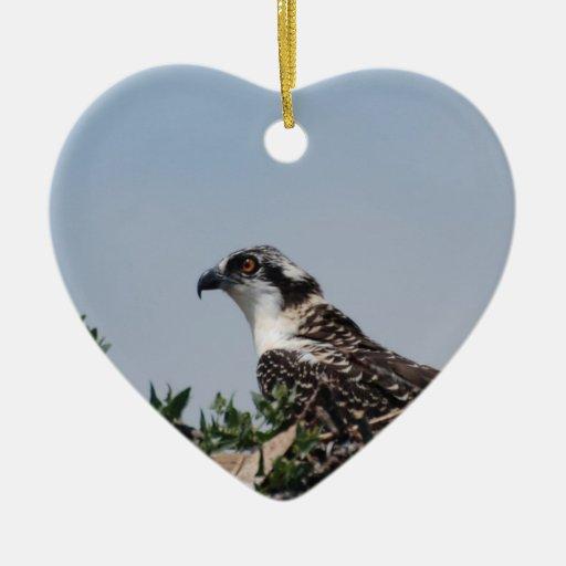 Osprey que se sienta en el ornamento de la ornaments para arbol de navidad