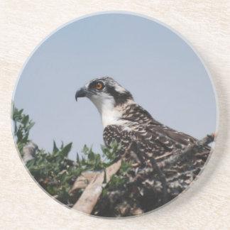 Osprey que se sienta en el práctico de costa de la posavasos diseño