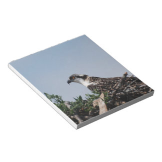Osprey que se sienta en la libreta de la jerarquía libreta para notas