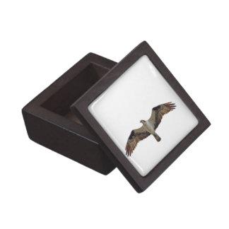 Osprey que vuela la foto caja de recuerdo de calidad