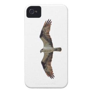 Osprey que vuela la foto iPhone 4 fundas