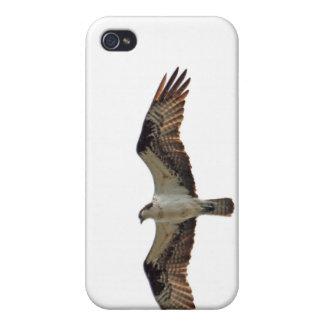 Osprey que vuela la foto iPhone 4 carcasas