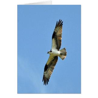 ¡Osprey se eleva! Tarjeta De Felicitación