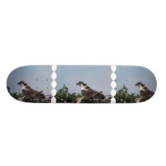 Osprey Sitting on a Nest Skateboard