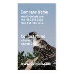 Osprey Sitting on Nest Business Cards