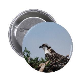 Osprey Sitting on Nest Button