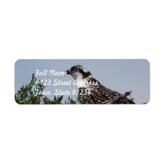 Osprey Sitting on Nest Mailing Labels