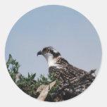 Osprey Sitting on Nest Stickers