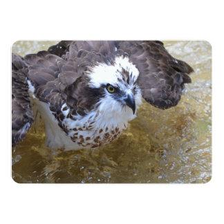 Osprey Splish Splash 5x7 Paper Invitation Card