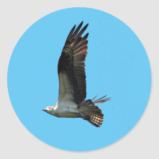Osprey Sticker 1