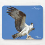 Osprey stretching wings Mousepad