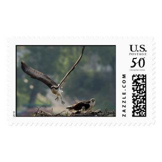 Osprey Take-off Stamp
