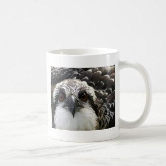 Osprey Tazas De Café