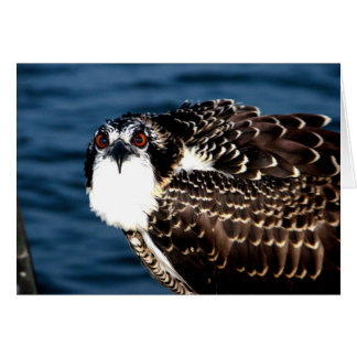 Osprey, Tilghman Island, Dogwood Harbor, Maryland Card