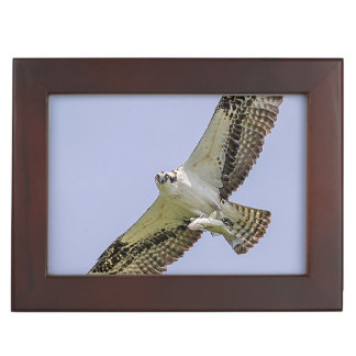 Osprey with a fish memory box