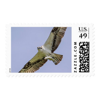 Osprey with a fish postage