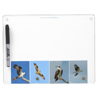Ospreys hawks Dry Erase Board