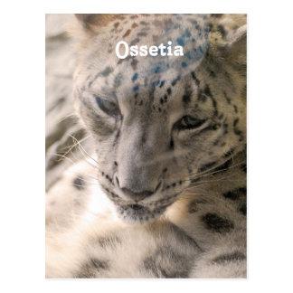 Ossetia Snow Leopard Postcard