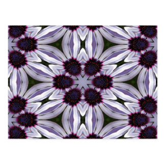 Osteospermum Abstract Postcard
