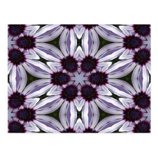 Osteospermum Abstract Post Card